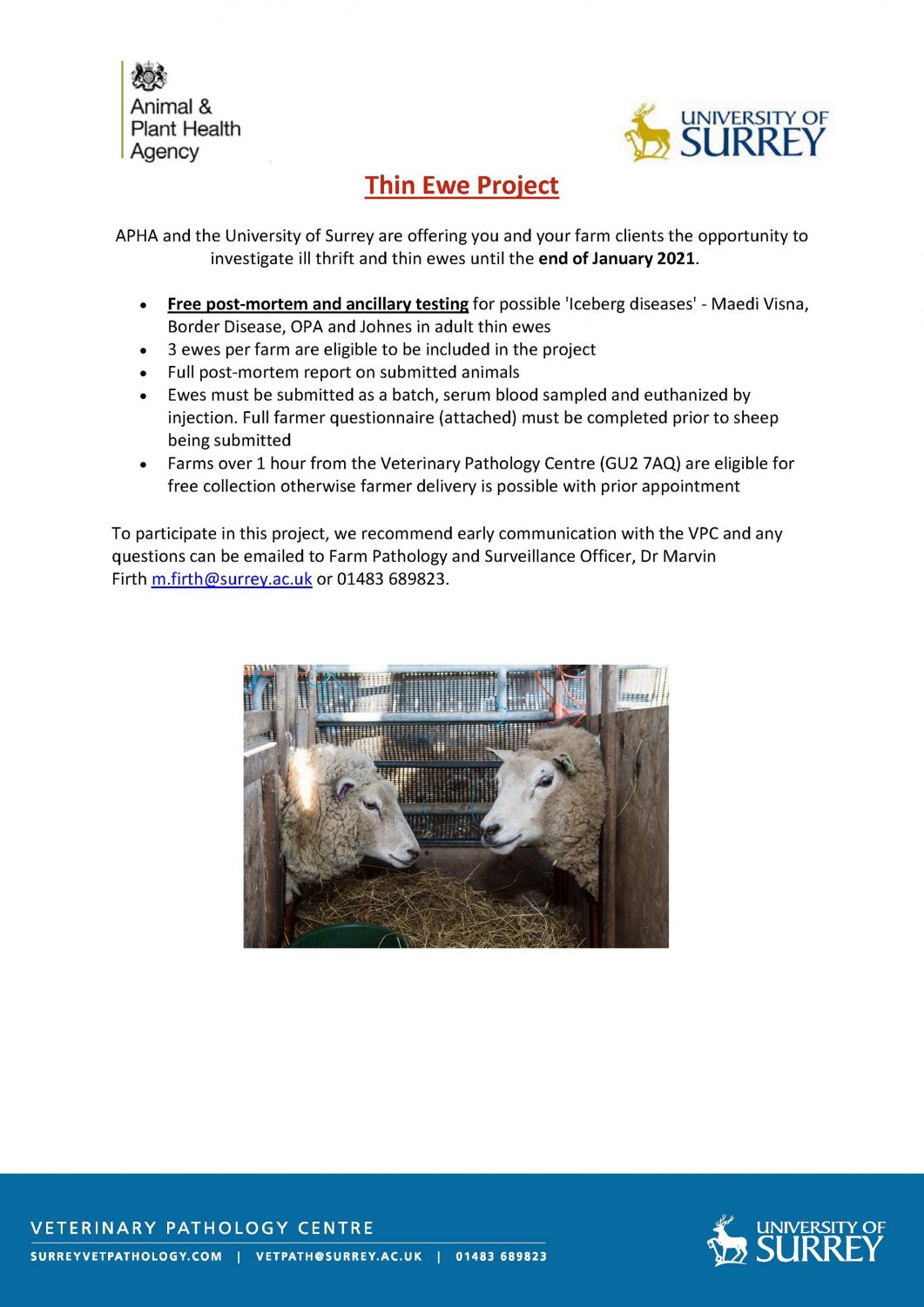 Thin Ewe Project: Extended to end of January 2021