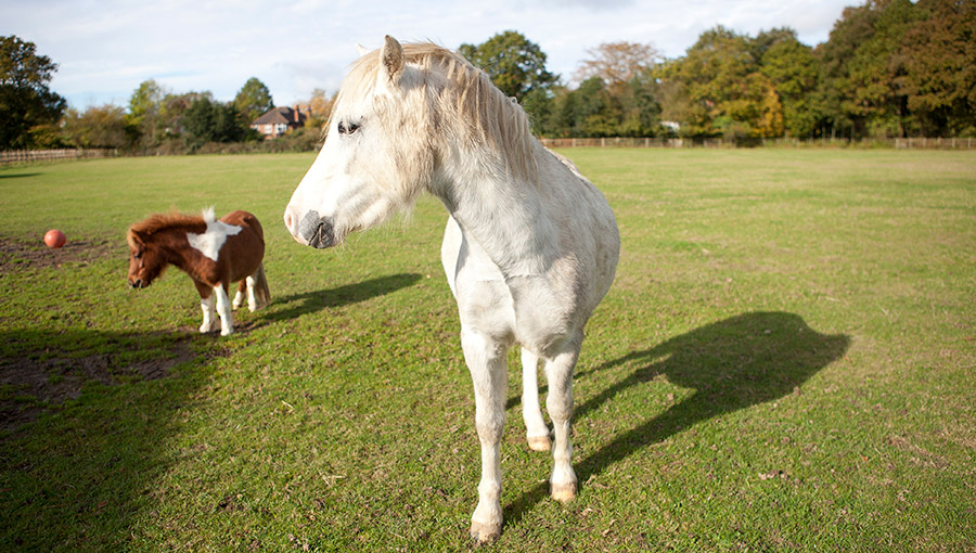 Horses in a field - equine pathology at the University of Surrey